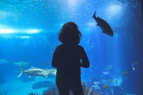 child watching fish in an aquarium