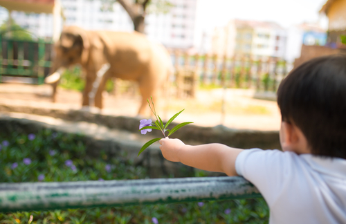 child holding a flower watching an elephant at the zoo