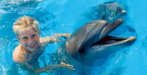 girl in a pool touching a dolphin